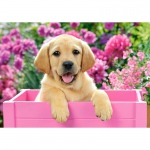 PUZZLE Labrador Puppy in Pink Box (500 Teile)