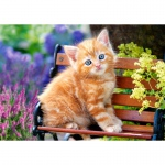 PUZZLE Ginger Kitten (500 Teile)