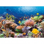 PUZZLE Coral Reef Fishes (1000 Teile)